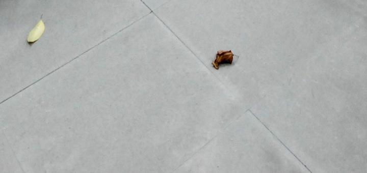 Pietra serena fiorentina