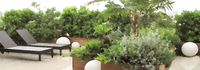 Luxury roof garden with Cameo pots